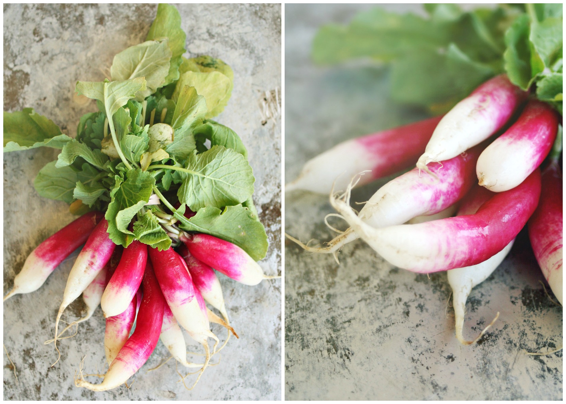 French Breakfast Radish Collage