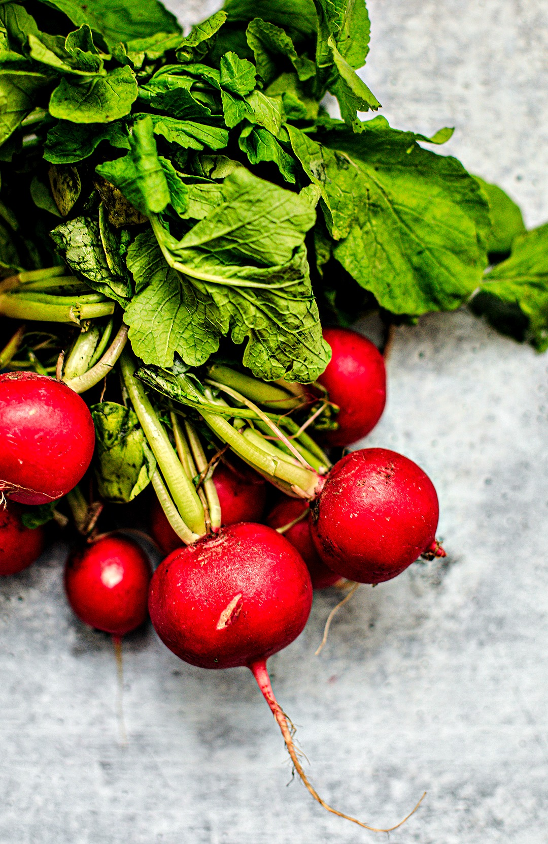 Close up of a bunch of radishes.