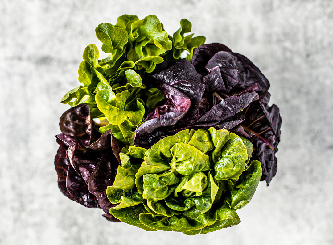 Head of green and purple artisan lettuce.