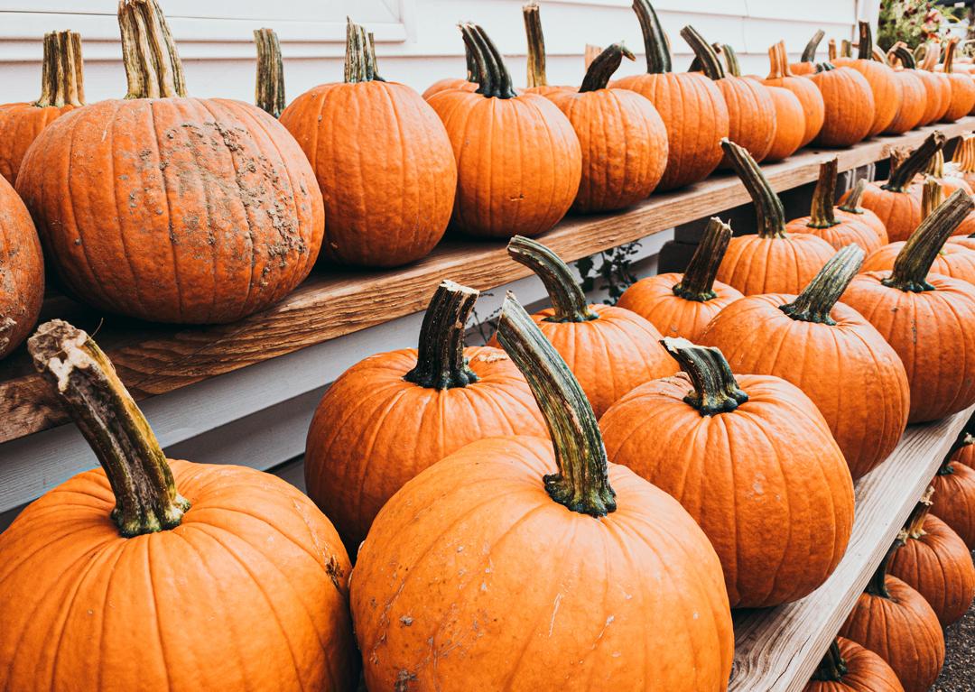 Pumpkins lined up on shelves.